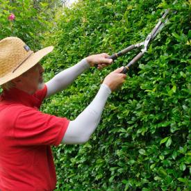 A man trimming a hedge wearing a straw hat and wearing IceRays Sun Sleeves for Maximum UV sun protection while gardening. Gardening